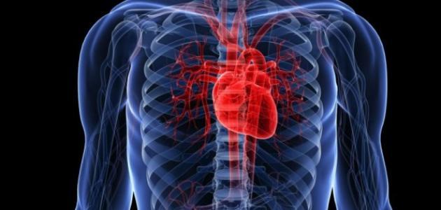 صورة جديد كيفية المحافظة على صحة القلب