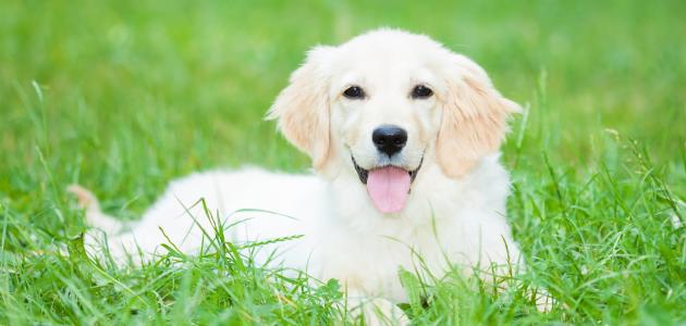 صورة جديد تربية الكلاب في الإسلام