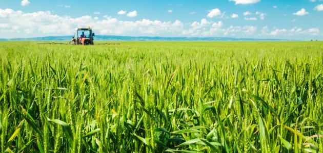 صورة جديد كيفية زراعة القمح