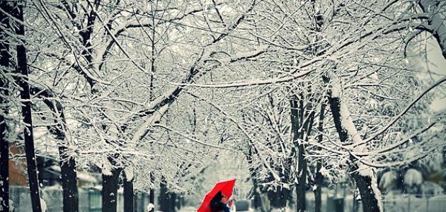 صورة جديد كلمات جميلة عن الشتاء والمطر