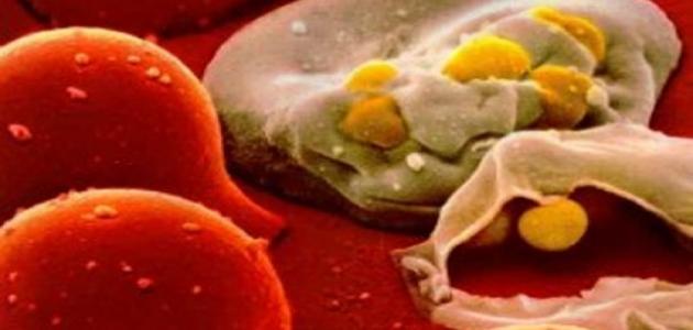 صورة جديد ما هي الأمراض التي تعالج بالخلايا الجذعية