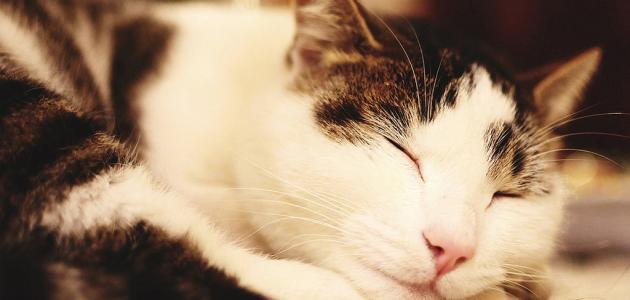صورة جديد ما هي أمراض القطط