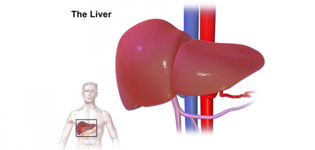 صورة جديد أضرار متبرع الكبد