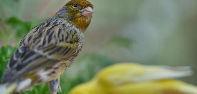 صورة جديد أنواع الطيور في الجزائر
