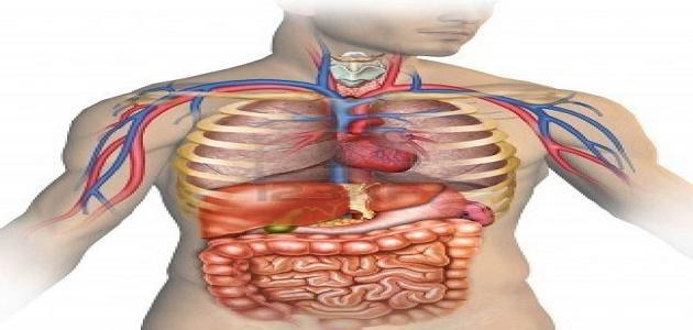 صورة جديد كم جهاز في جسم الإنسان