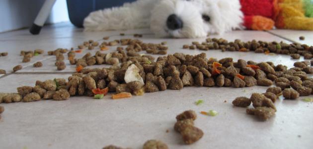 صورة جديد ما هو طعام الكلاب