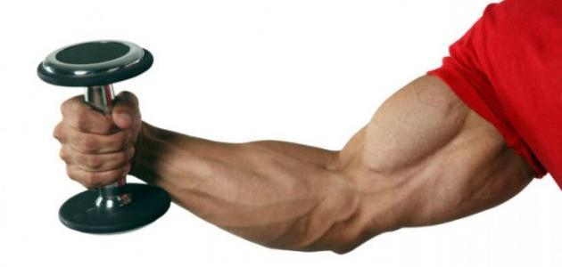 صورة جديد كيف أقوي عضلات اليد