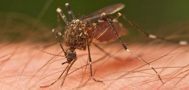صورة جديد طرق انتقال مرض الملاريا