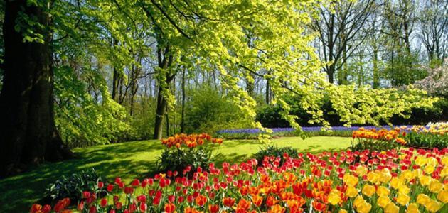 صورة جديد عبارات عن فصل الربيع