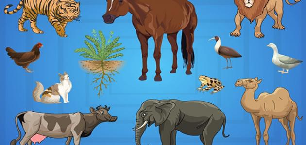 صورة جديد أهمية طبقة التروبوسفير بالنسبة للكائنات الحية