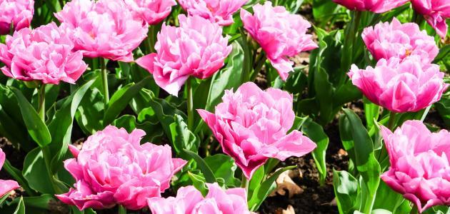 صورة جديد تنوع النباتات الزهرية
