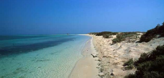 صورة جديد جزيرة فرسان في السعودية