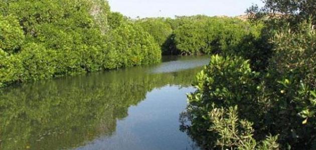 صورة جديد معلومات عن محمية جزر فرسان
