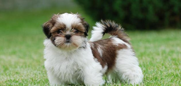 صورة جديد أنواع الكلاب الأليفة