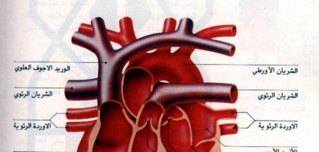 صورة جديد كم عدد صمامات القلب
