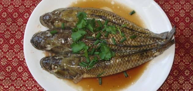 صورة جديد سمك الباسا الفيتنامي