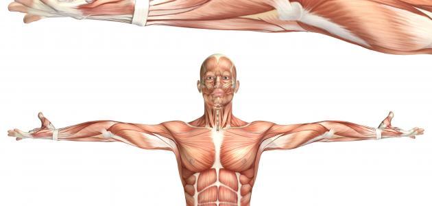 صورة جديد أمراض العضلات