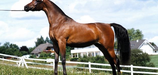 صورة جديد قوة الحصان