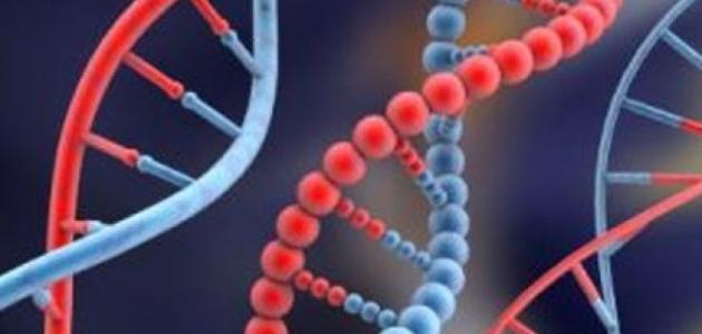 صورة جديد أنواع الأمراض الوراثية