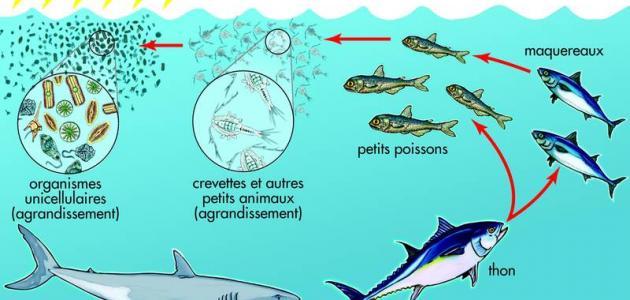 صورة جديد سلسلة غذائية مائية