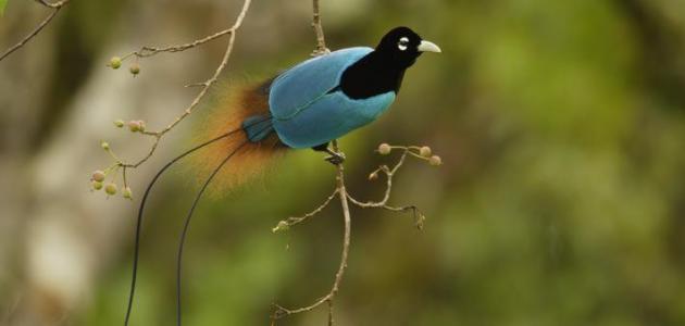 صورة جديد أسماء طيور غريبة