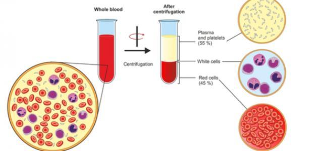 صورة جديد من ماذا يتكون الدم