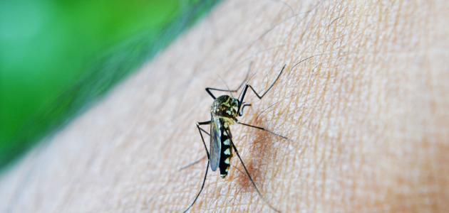 صورة جديد مقاومة الملاريا