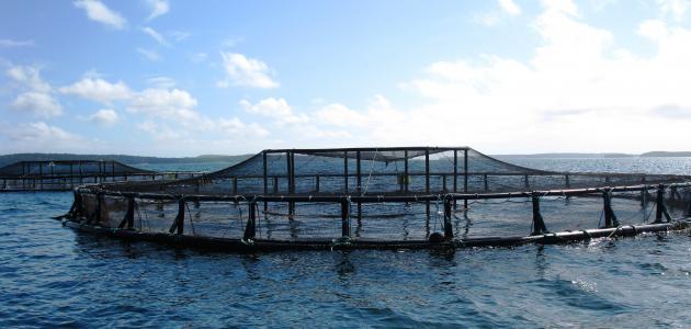 صورة جديد ما مزايا وعيوب الزراعة المائية