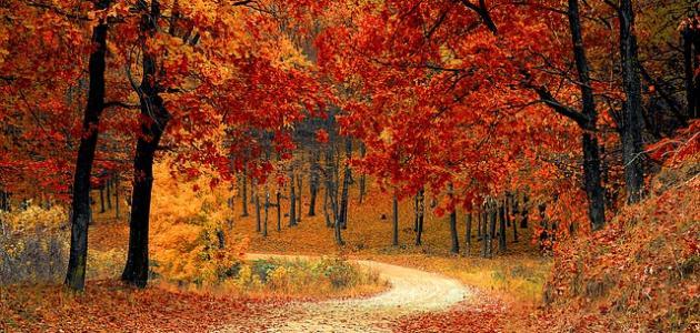 صورة جديد عبارات جميلة عن فصل الخريف