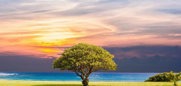 صورة جديد كيفية المحافظة على الشجرة