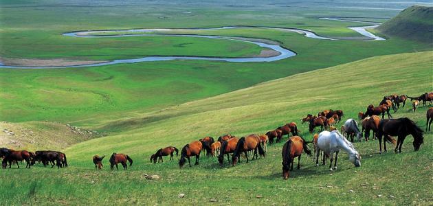 صورة جديد أين تقع منغوليا