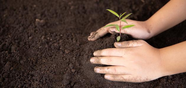 صورة جديد موضوع عن زراعة الأشجار
