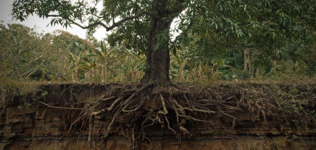 صورة جديد أجزاء الشجرة