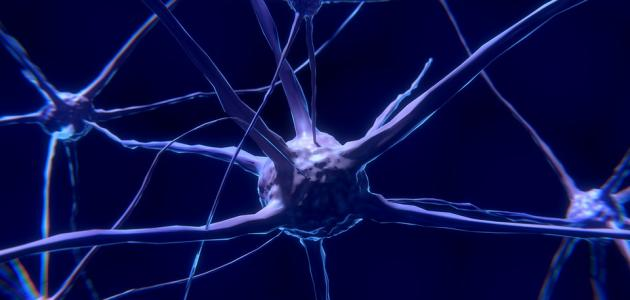 صورة جديد ما هو الجهاز العصبي