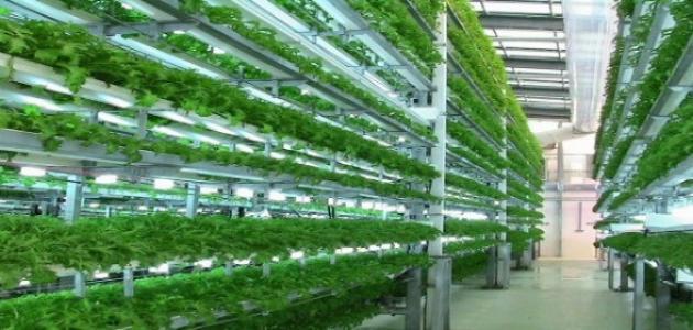 صورة جديد طريقة الزراعة بدون تربة