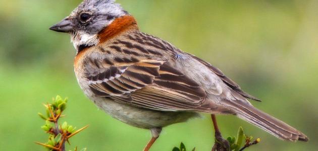 صورة جديد كيفية تربية الطيور