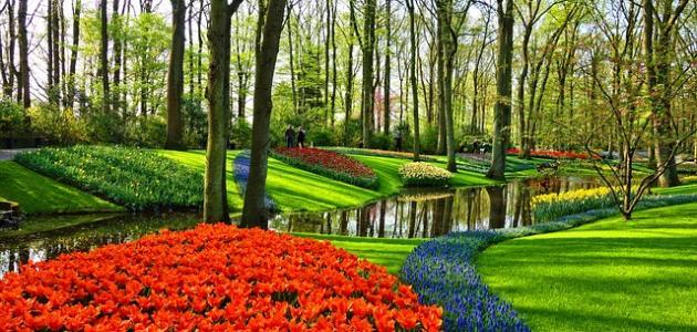 صورة جديد مدينة الورود في هولندا