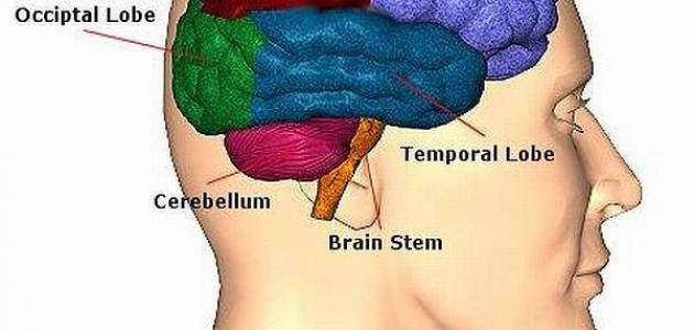 صورة جديد ما هي أعراض سرطان الدماغ