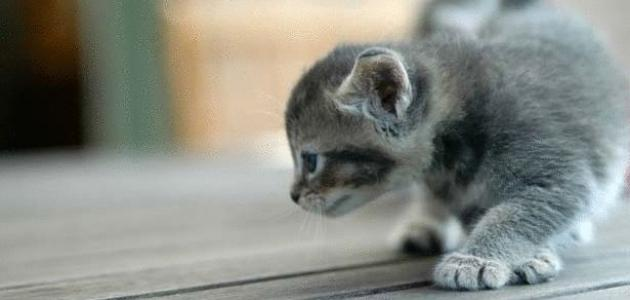 صورة جديد كيفية تربية القطط