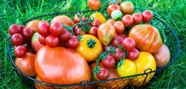 صورة جديد فوائد الطماطم