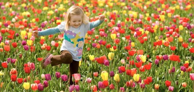 صورة جديد معلومات عن فصل الربيع