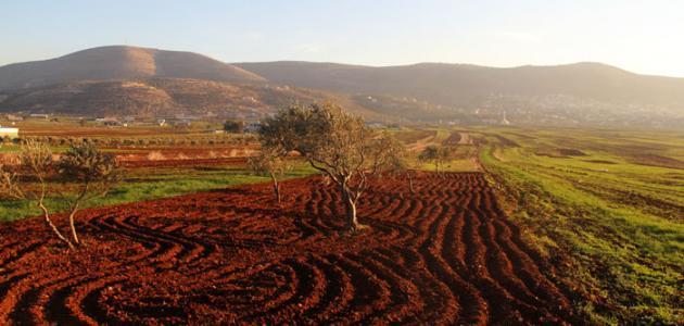 صورة جديد ما هي أهم سهول فلسطين