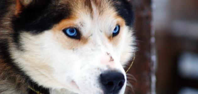 صورة جديد أحسن أنواع الكلاب