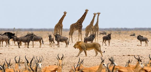 صورة جديد أين تقع ناميبيا