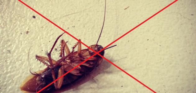 صورة جديد كيف أتخلص من الصراصير نهائياً