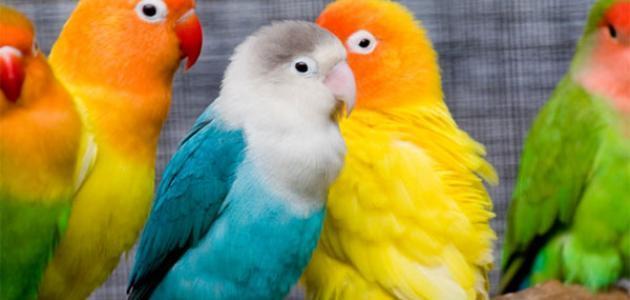 صورة جديد كلام عن الطيور
