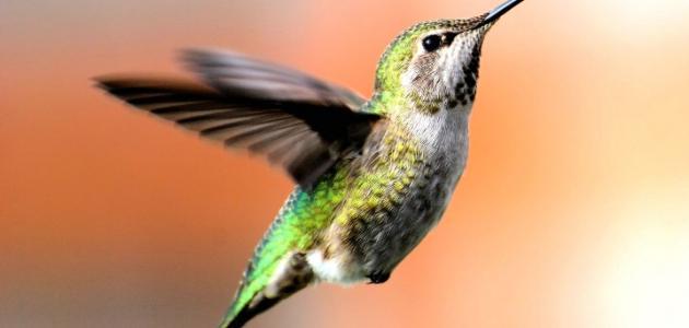 صورة جديد بحث عن بديع خلق الله في الطيور