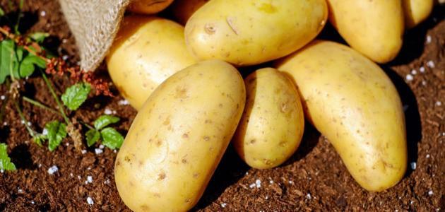 صورة جديد فوائد وأضرار البطاطا