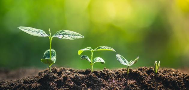 صورة جديد مراحل نمو الشجرة