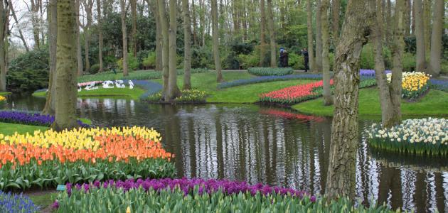 صورة جديد أكبر حديقة في العالم